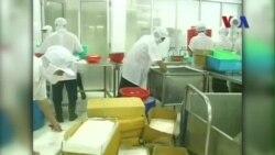 EU, Nhật liên tục cảnh cáo VN về thuốc kháng sinh trong tôm