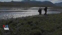 طبیعتگردی با آرت وولف - پناهگاه ملی حیات وحش آرکتیک