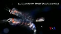 浮游生物粪渣助科学家预测气候变化