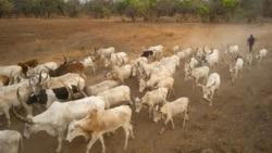 Les communautés rurales innovent pour résoudre les conflits entre éleveurs et agriculteurs