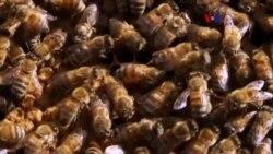 Nuevo fármaco que podría salvar abejas