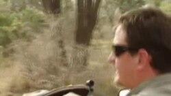 南非犀牛惨遭偷猎者捕杀