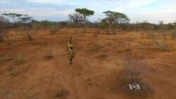 Tanzanian Tribe Turns to Carbon Offsets to Protect Ancestral Forests