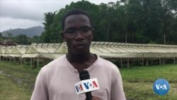 São Tomé aposta no chocolate da terra que não tem comparação com mais nenhum