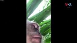 سیلفی کا شوقین بندر موبائل فون لے کر فرار