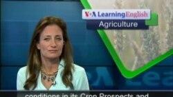 Poor Harvests in Africa's Sahel Area Threaten Food Security