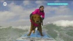 Необыкновенная собака катается на волнах и помогает людям