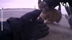 Mỹ: Cảnh sát cứu mèo con lạc lõng giữa xa lộ