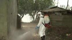 Cúm gia cầm lan ra 10 tỉnh Việt Nam