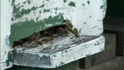 Polish Beekeepers Concerned When Banned Chemicals Temporarily Approved