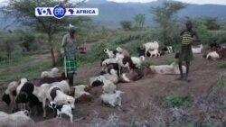 Ubuhinzi Ntibwifashe Neza muri Uganda