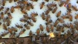 Arıları qorumaq