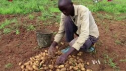 Ebola Economic Toll Stirs W. Africa Food Security Concerns