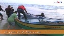فلسطینی ماہی گیر، 'رے' مچھلیاں پکڑنے کا موسم