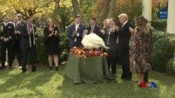 美國總統川普赦免火雞