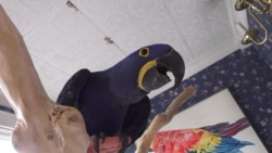 Parrots for The Price of A Car at Exotic Bird Store in Virginia