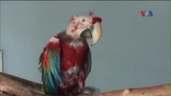Tới thăm trung tâm cứu chim trời ở Virginia, Hoa Kỳ