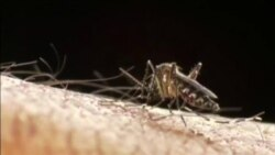 Bùng phát Zika: Gần 500 cư dân New York bị nhiễm