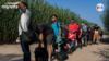Adultos jóvenes componen la mayoría de los grupos de venezolanos que cruzan ilegalmente hacia EE. UU. a través de Del Río, Texas.