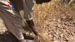 Pakistani Engineer Turns Straw Waste Into Fuel