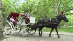 Animal Welfare at Issue in Fight Over Horse-Drawn Carriage Rides in NYC