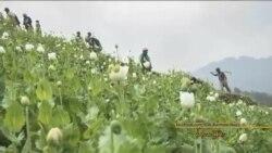 ကခ်င္ဘိန္းတုိက္ဖ်က္ေရး လႈပ္ရွားသူေတြ တုိက္ခုိက္ခံရ