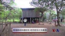 柬埔寨森林遭砍伐 老百姓生计无着落