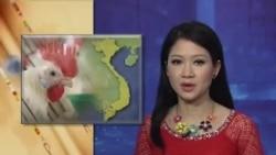 VN báo động về dịch cúm gia cầm H7N9 lây lan