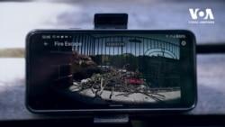 Яструби звили гніздо поруч з вікном житлової квартири в центрі Нью-Йорка. Відео