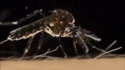 США: первая смерть от вируса Зика