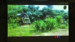 ဆီအုန္းေနာက္ကြယ္အေျခအေန အစီရင္ခံစာ