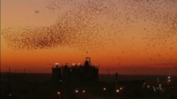 Birds Create Stunning Formations in Skies Over Israel