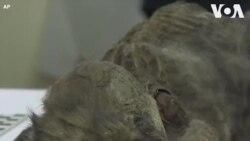 Xác ướp cún con 18 ngàn năm tuổi