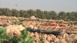 ฟาร์มในกาต้าร์พัฒนาดินจากปุ๋ยหมักเพื่อใช้ในการเกษตร
