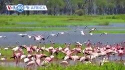 Kenya: Imisambi Yongeye Kureshya ba Mukerarugendo ku Kiyaga cya Nakulu