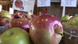 Maryland Farm Attracts Buyers Looking for Healthful Food