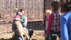 Pet Kangaroo Helps Spread Environmental Message