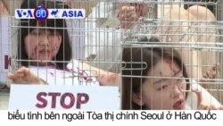Seoul: Biểu tình kêu gọi cấm ăn thịt chó