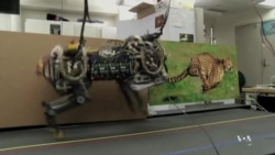 MIT Scientists: Robots Will Soon be Able to Run Like Cheetahs