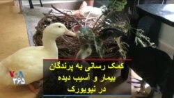 کمک رسانی به پرندگان بیمار و آسیب دیده در نیویورک