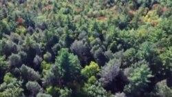 Bosques infectados en Estados Unidos