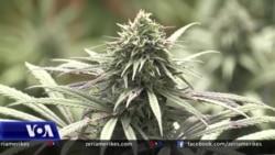 Ekspertët: Legalizimi i prodhimit të marijuanës medicinale nuk ndal krimin, problemet sociale