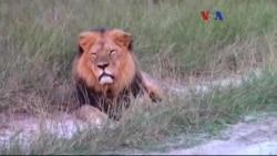 Aslan Öldüren Amerikalı'ya Tepki Büyüyor