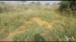 تھرپارکر میں ٹڈی دل کا حملہ