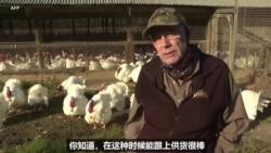 疫情下的感恩节 美国火鸡销量增长
