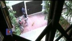 آوارہ کتوں، بلیوں کی مدد کرنے والے نوجوان
