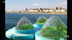 Floating Farms Could See Vegetables Grown at Sea