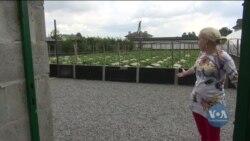 Як США допомагають українським фермерам розвивати бізнес? Відео.