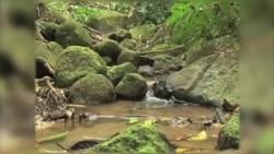رابطه صحرای آفریقا با جنگل های آمازون