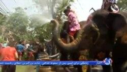 فیلم جشن آب بازی فیلها با مردم در سال نوی سنتی تایلند